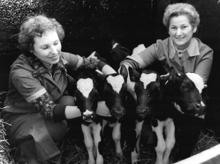 (c) Medrow, Bäuerinnen mit Kälbern, Bundesarchiv_Bild_183-1983-1124-003, Foto: Benno Bartocha